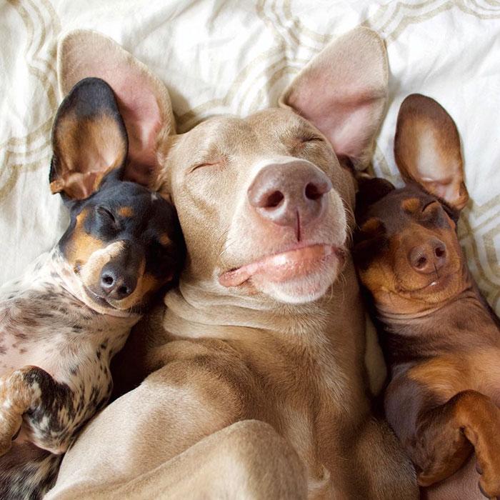 Tres-perros-amigos 02