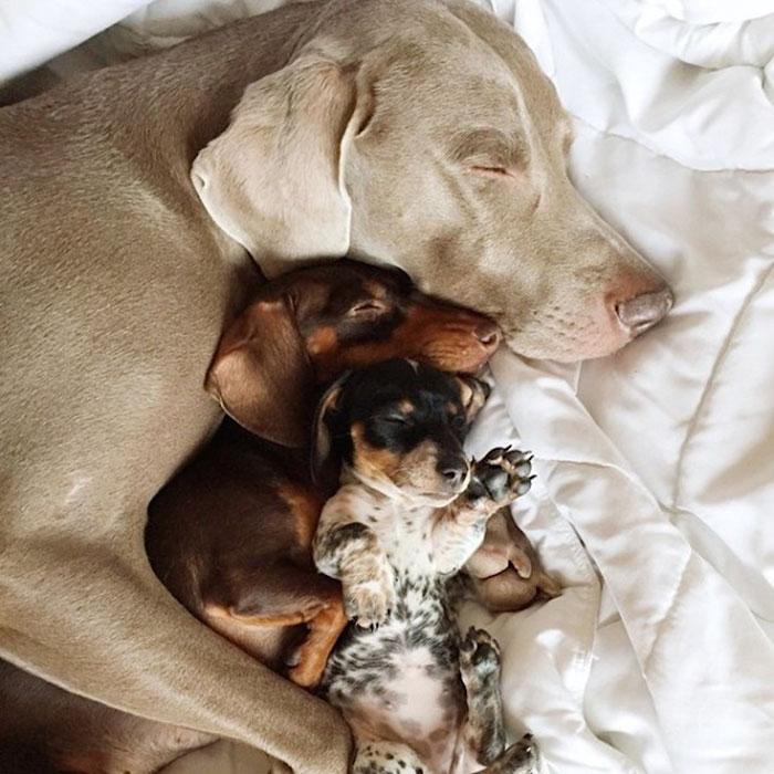 Tres-perros-amigos 03