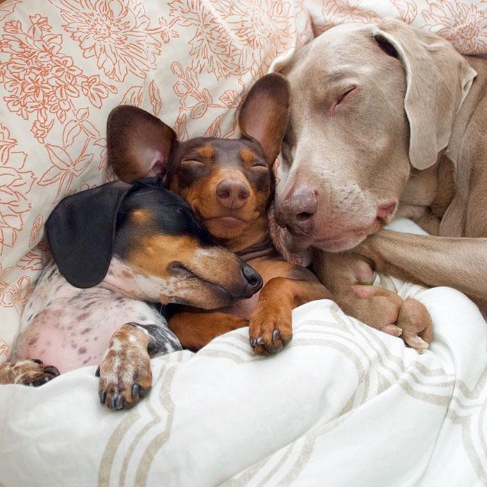 Tres-perros-amigos 04
