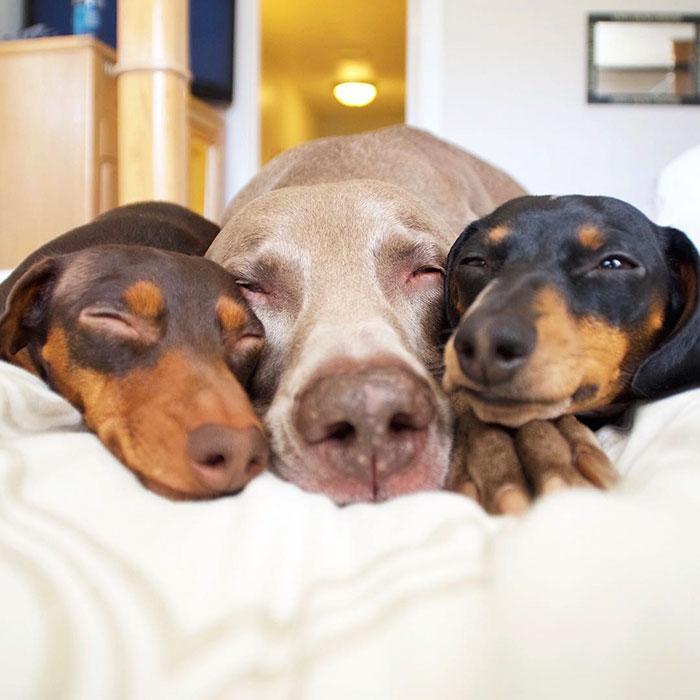 Tres-perros-amigos 07