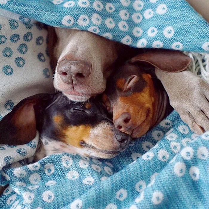 Tres-perros-amigos 08