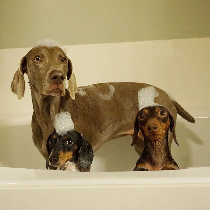 Tres-perros-amigos 10