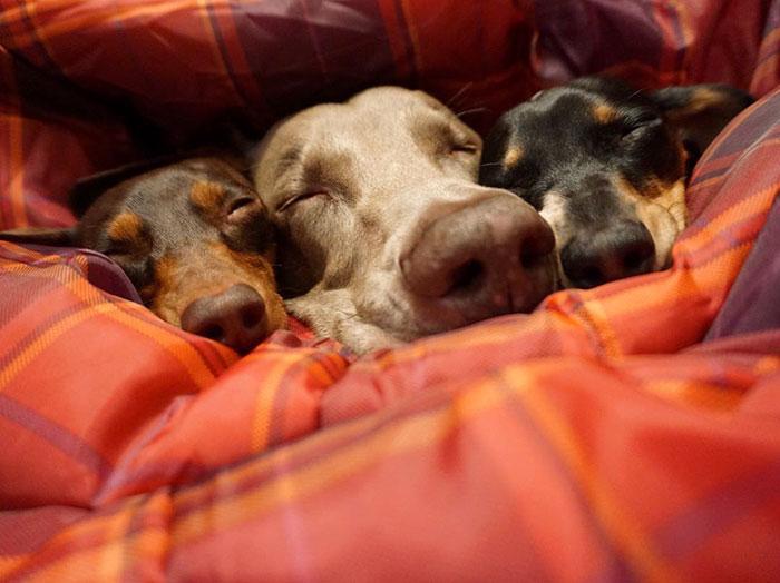 Tres-perros-amigos 11