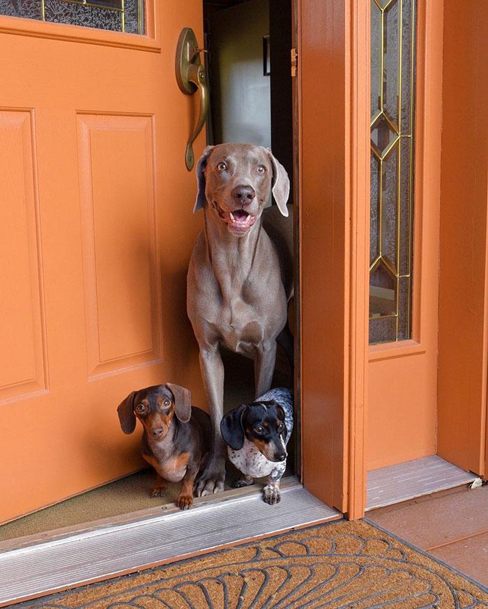 Tres-perros-amigos 14