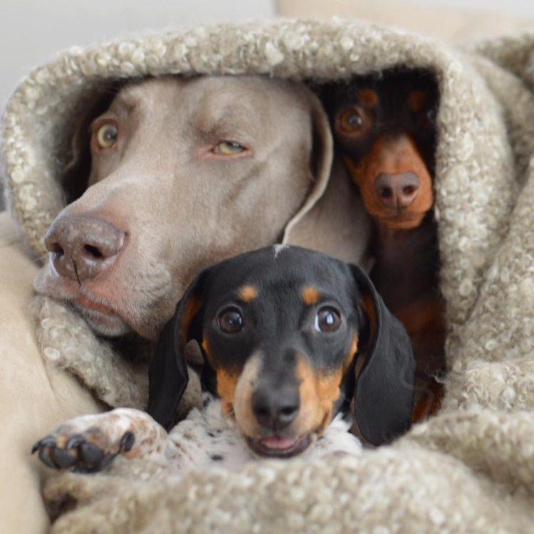 Tres-perros-amigos 16