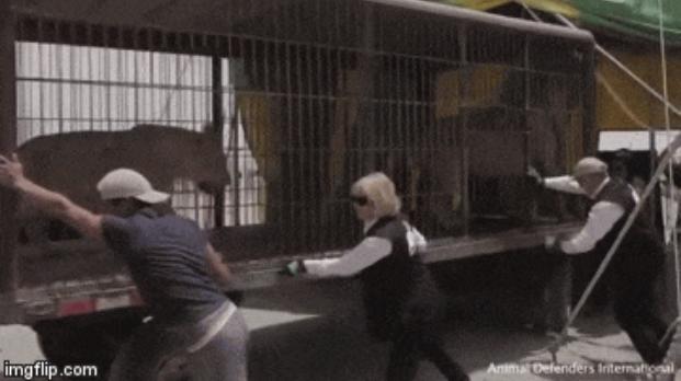 animales de circo liberados jaulas para gatos