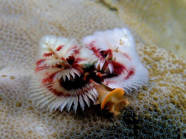 animales marinos arbol navidad