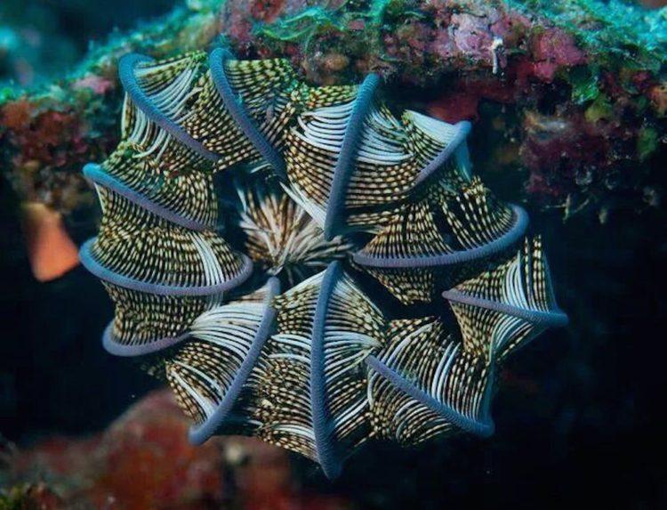 animales marinos estrella plumas