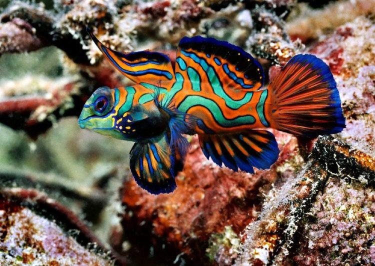 animales marinos mandarin
