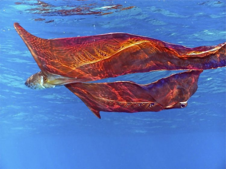 animales marinos pulpo