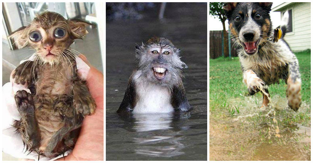 animales-mojados