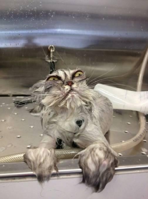 animales-mojados10