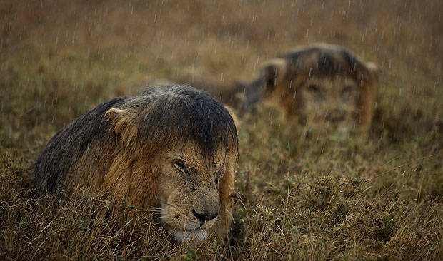 animales-mojados12
