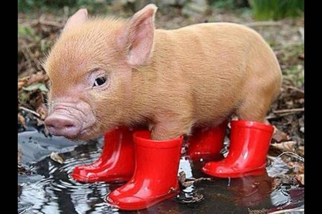 animales-mojados16