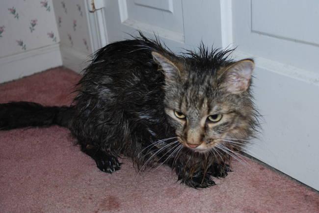 animales-mojados2