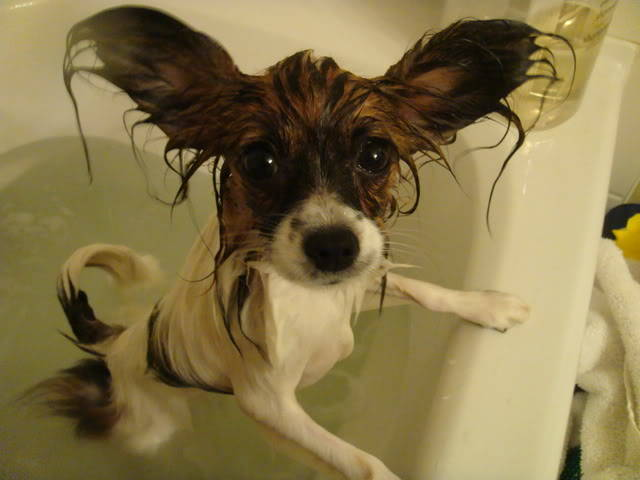 animales-mojados4