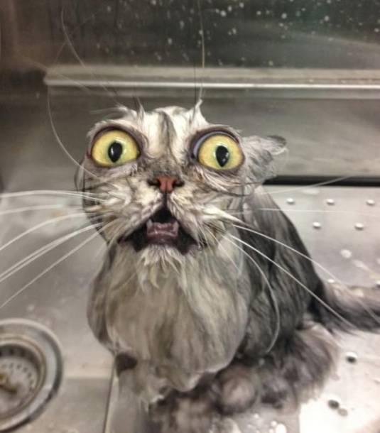 animales-mojados8