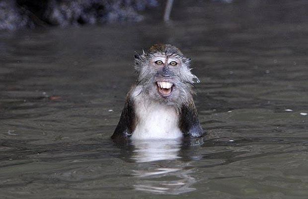 animales-mojados9