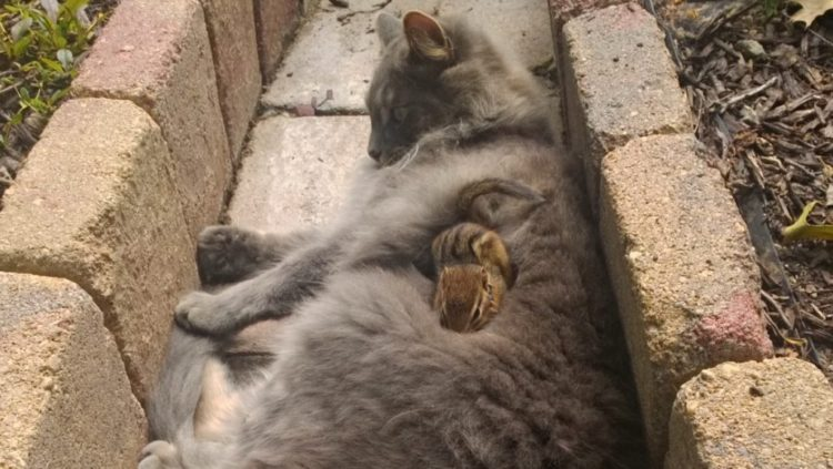 ardilla-gato-amigos1