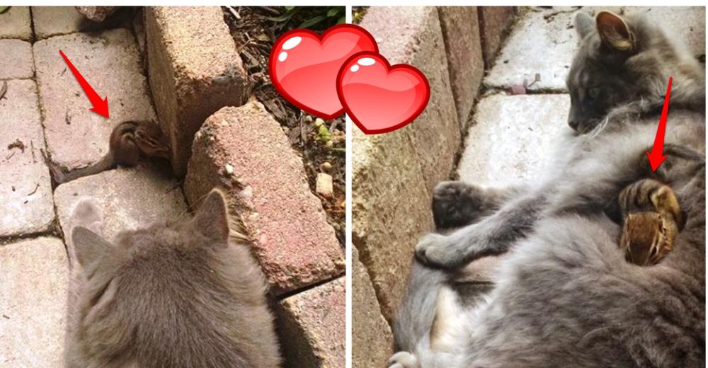 ardilla-gato-amigos1 - Copy