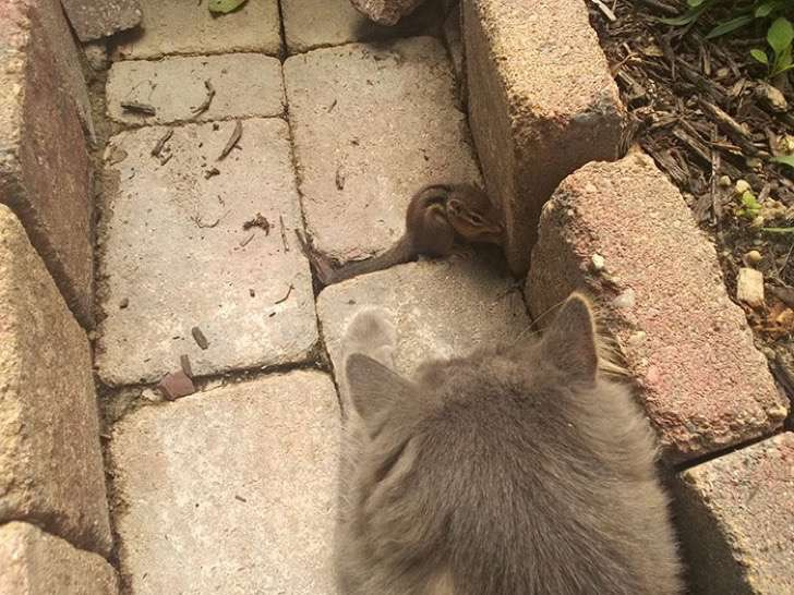 ardilla-gato-amigos2