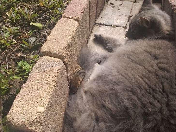 ardilla-gato-amigos4