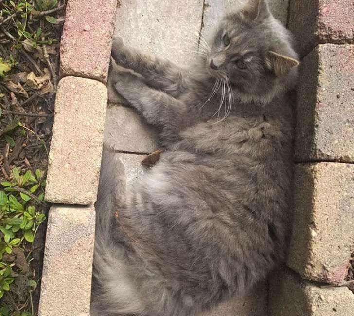 ardilla-gato-amigos6
