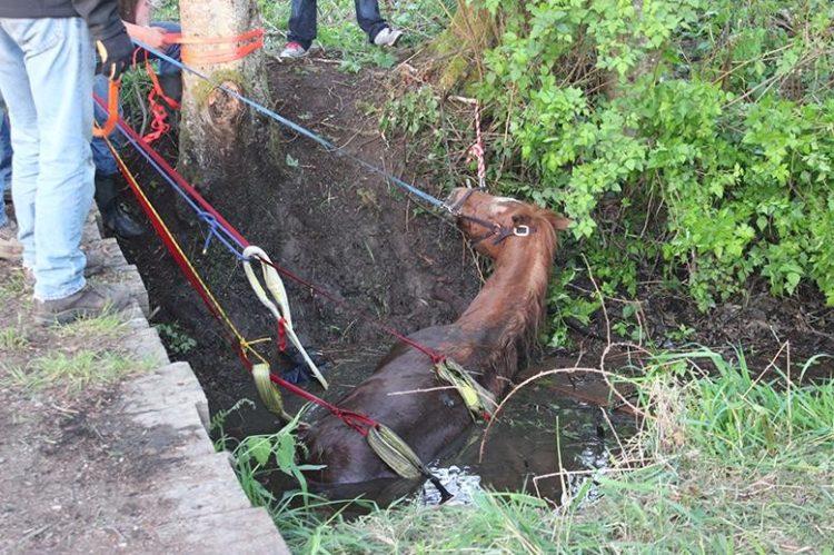 caballo atrapado arroyo fango
