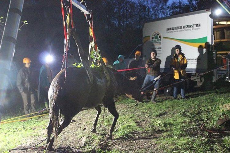 caballo atrapado arroyo heridas