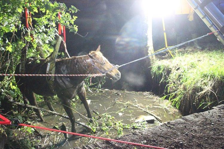 caballo atrapado arroyo saliendo