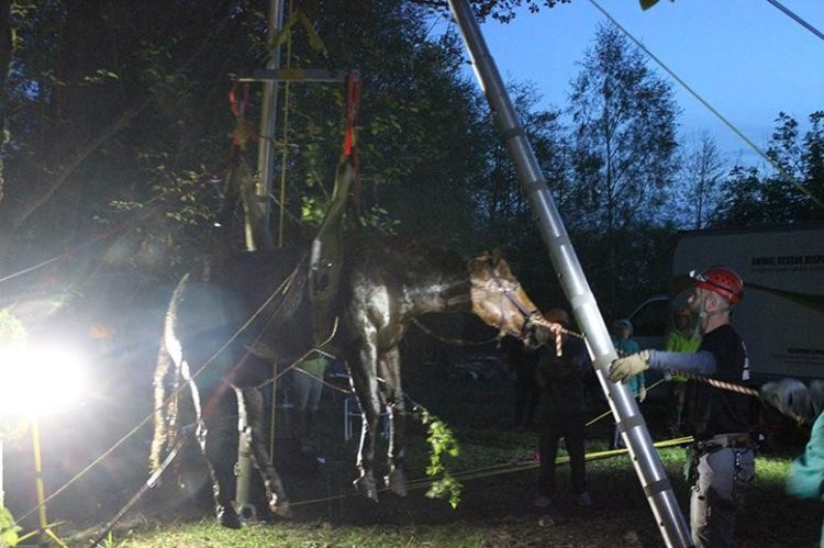 caballo atrapado arroyo seguro
