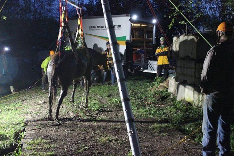 caballo atrapado arroyo sin daño