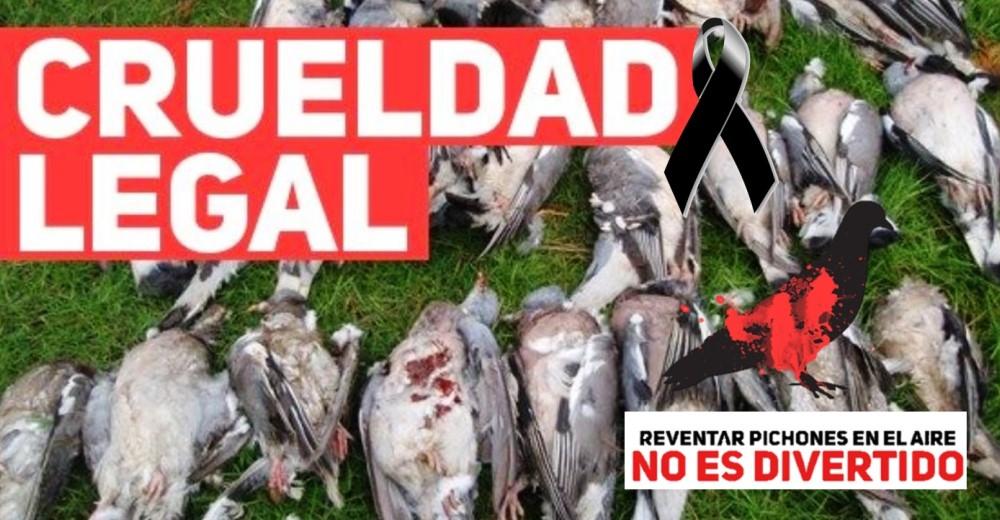 campana-para-prohibir-festival-de-caza-de-aves1 - Copy