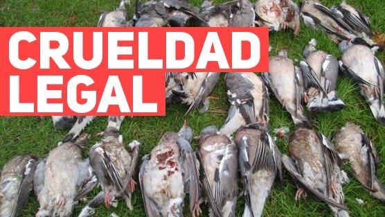 campana-para-prohibir-festival-de-caza-de-aves1