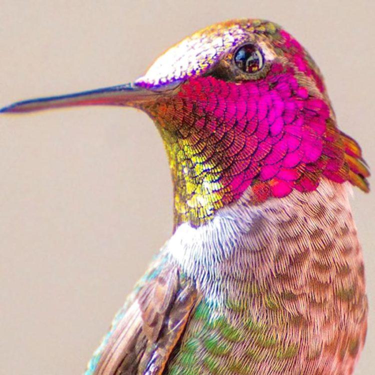 collibries hermosos arcoiris