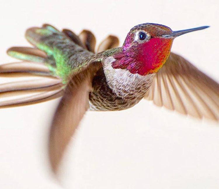 collibries hermosos colores