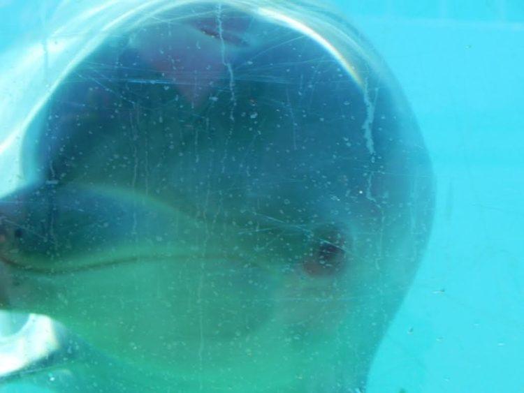 delfin-enfermo-cansado2