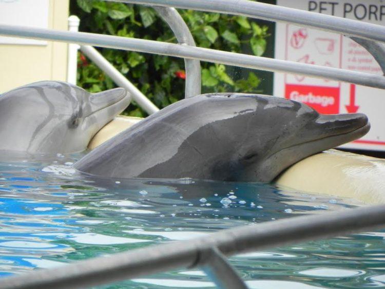 delfin-enfermo-cansado5
