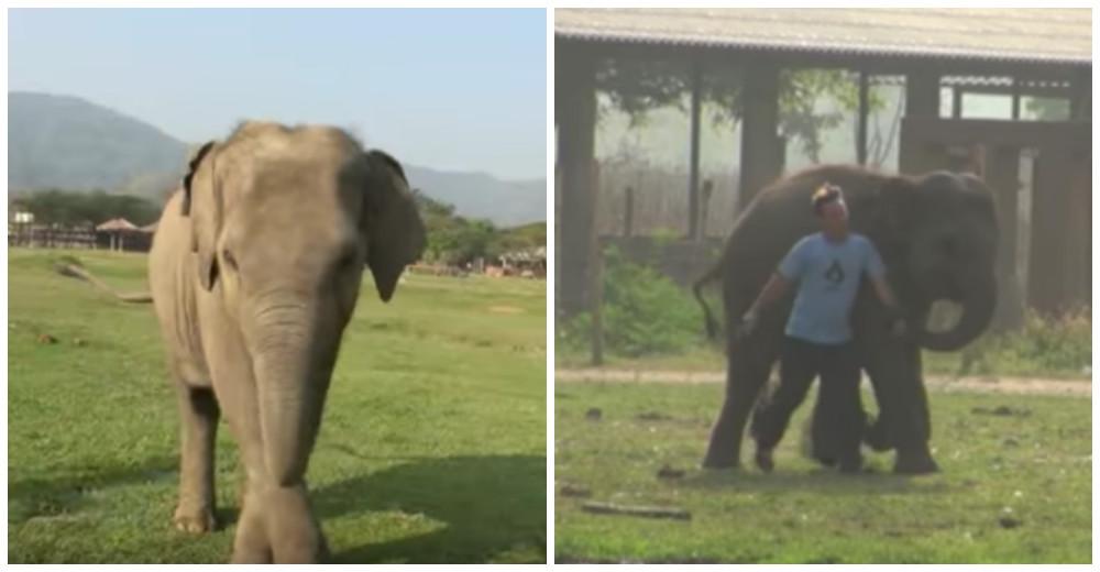 elefante-bebe-corre