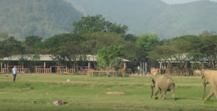 elefante-bebe-corre1