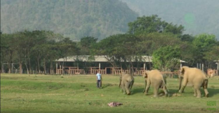 elefante-bebe-corre2