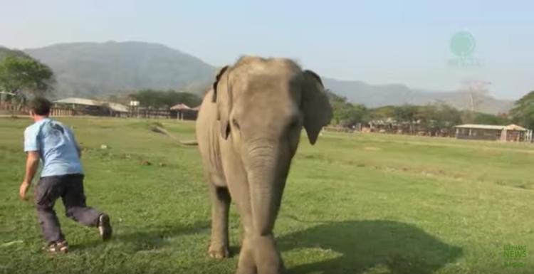elefante-bebe-corre3