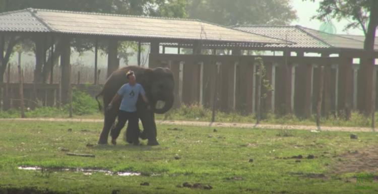 elefante-bebe-corre5