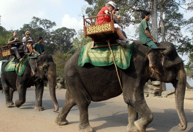 elefante muere golpe de calor trabajando