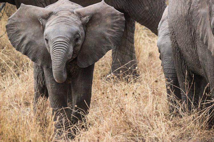 elefantes-marfil-eeuu5