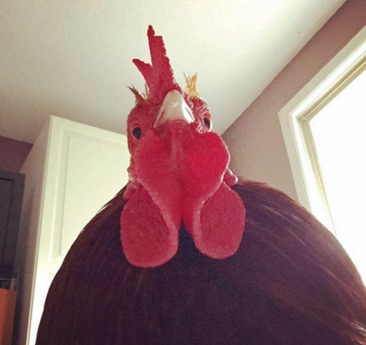 gallo-despierta-cara2
