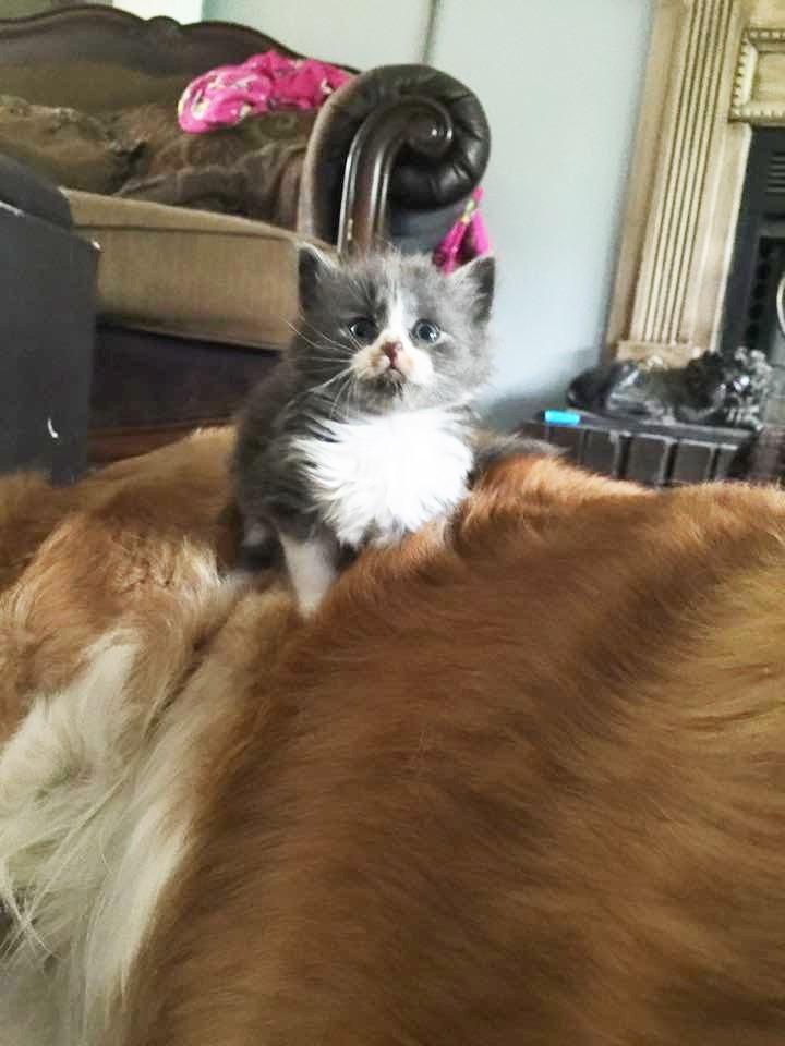 gatitos-huerfanos-abrazos5