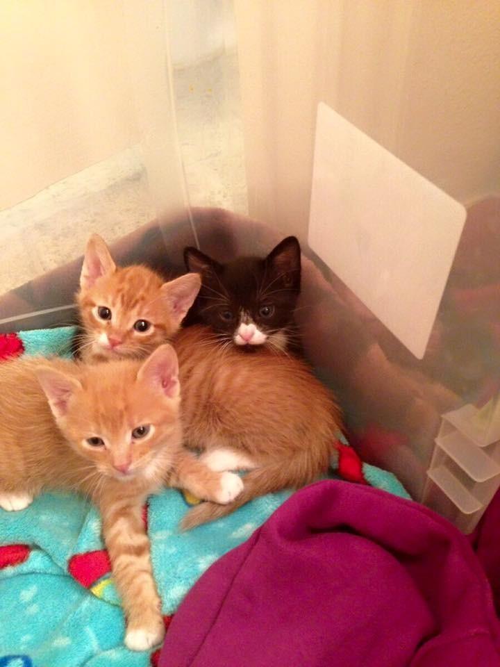 gatitos-rescatados-hermanos1