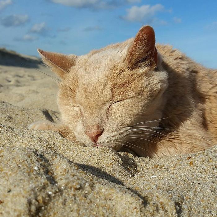 gato-adoptado-enfermo1