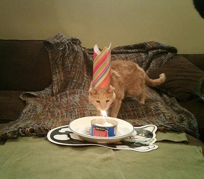 gato-adoptado-enfermo10